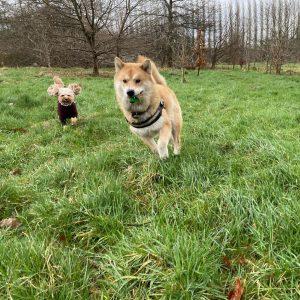 Winnie and Henry in fletcher moss